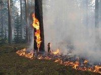 В лесах Поморья введен особый противопожарный режим – гражданам запрещено посещать леса