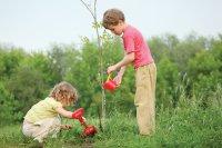 В Мирном снова посадили деревья