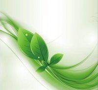 «Зеленая волна» шагает по Архангельской области