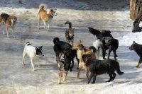 Отлов собак продолжается