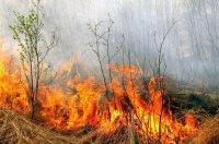 В лесах Архангельской области продолжает действовать особый противопожарный режим