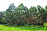Как не заблудиться в лесу, а если это случилось, что нужно делать