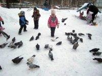 «Покормите птиц»