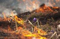 Росреестр предупреждает землепользователей  о недопустимости пала сухой растительности